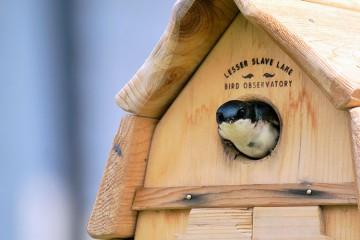 LSLBO birdhouse