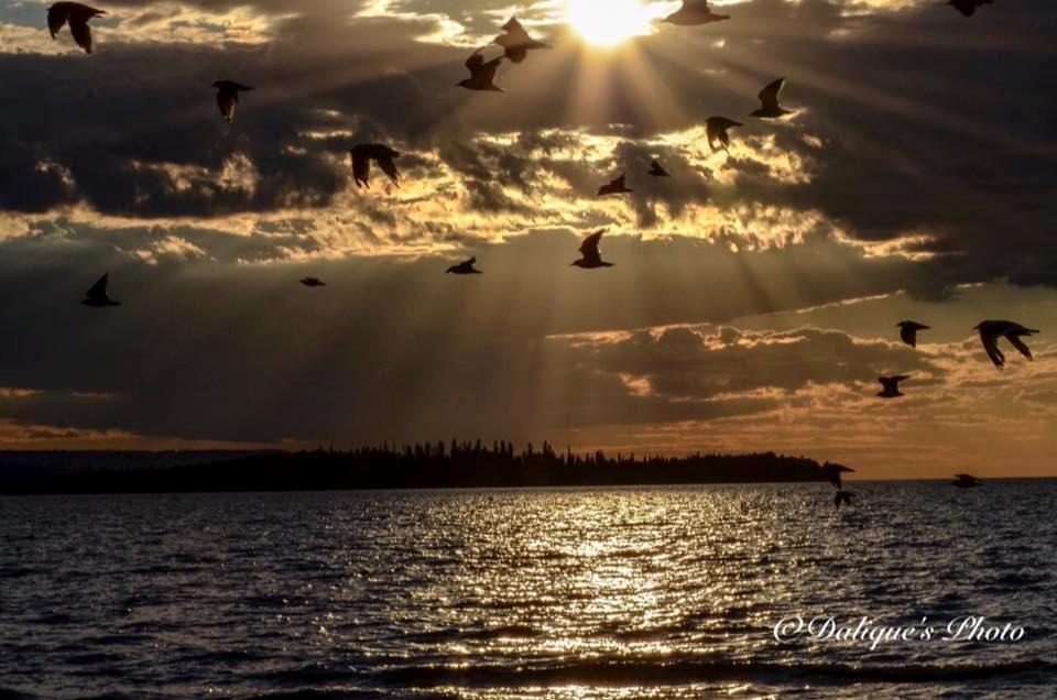 gulls - Dalique Van Der Nest
