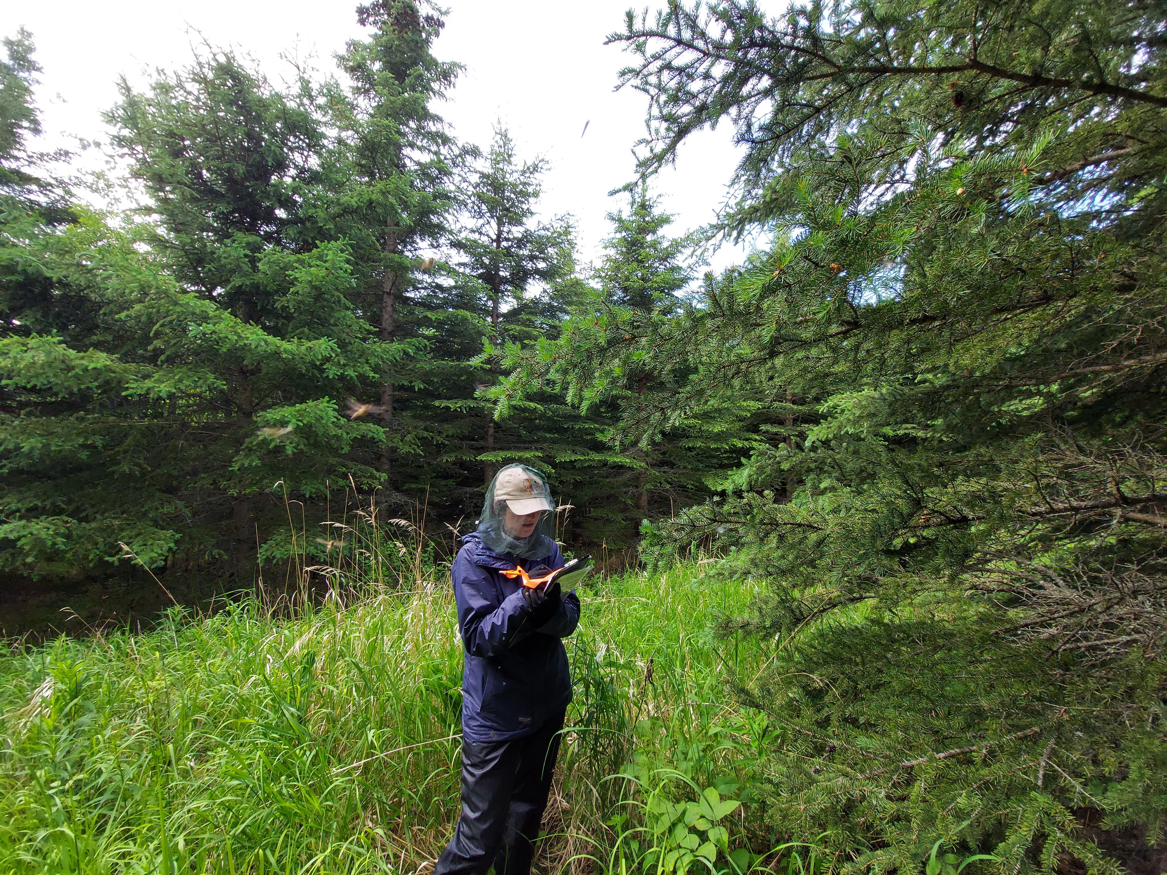 Woman standing amongst spruce