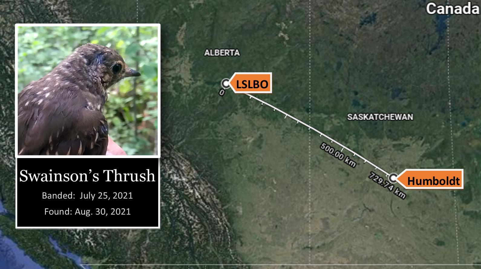 Map of Swainson's Thrush recovery in Humboldt, Saskatchewan